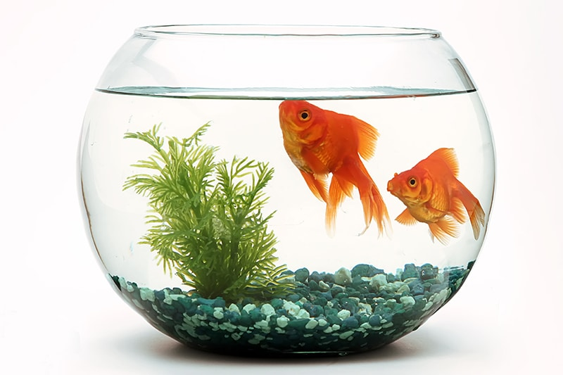 What a goldfish can teach you about selling books